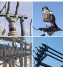 Midsun protection avifaune pour jeux de barre HTB HTA transformateurs électriques et sous stations EDF ENEDIS RTE