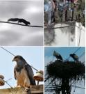 Midsun PROTECTION PANNES PROVOQUÉES PAR LES ANIMAUX SAUVAGES SUR LES LIGNES AÉRIENNES ET LES SOUS-STATIONS électriques